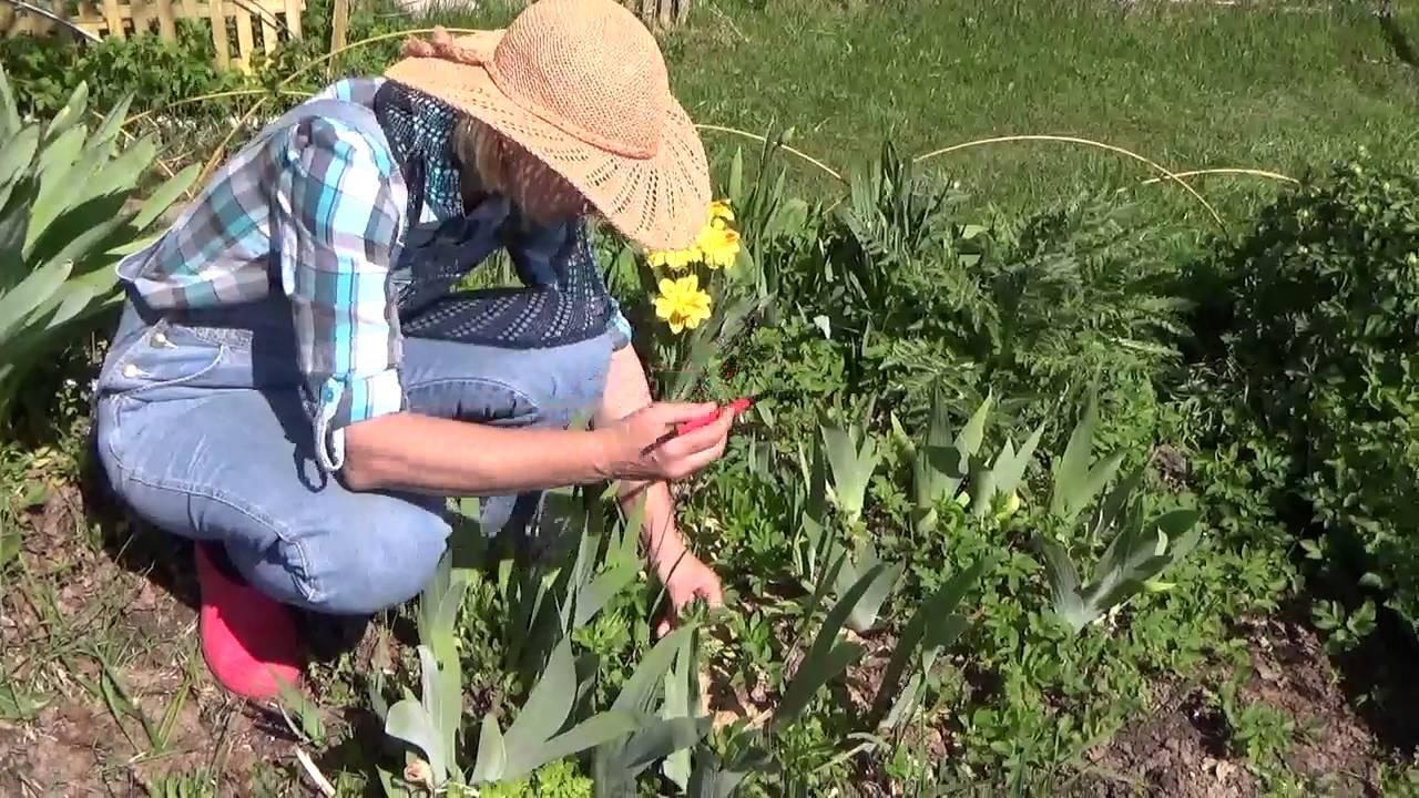 Как сажать горчицу для борьбы с сорняками