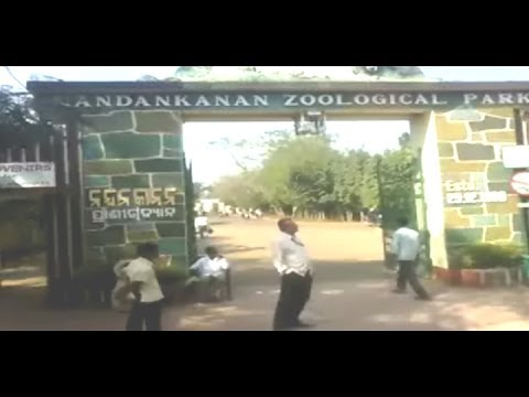 Nandankanan Zoological Park,bhubaneswar,odissa,india video