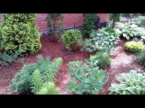 Оформление парадной, входной зоны участка и входа в сад – растения и план