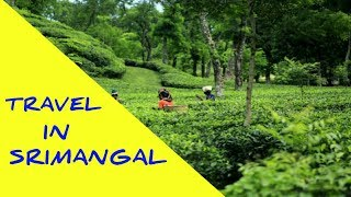 Travel in Srimangal