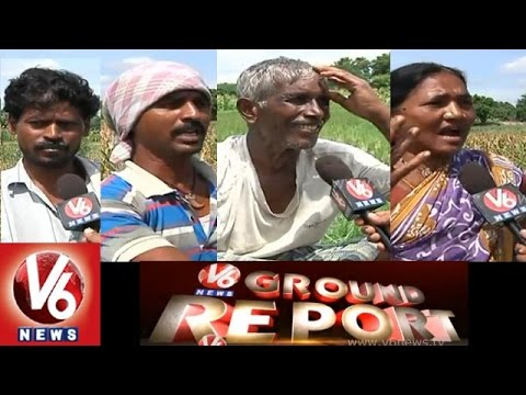 Karimnagar farmers lost thier crop in drought as there are no rains - V6 Ground Report