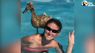 Duckling Becomes Mom's Therapy Animal | The Dodo