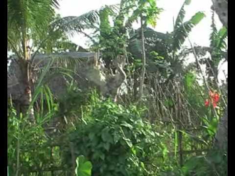 Secondary Rainforest in Tigaon, Philippines