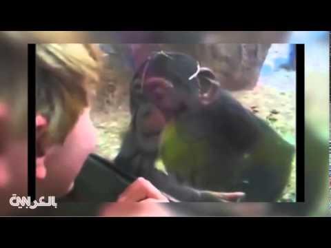 مشاهد مضحكة  لأطفال داخل حديقة الحيوانات