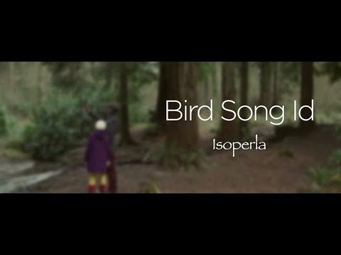 Bird Song Id: Auto Recognition APK Cover