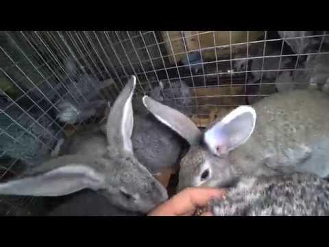 Крольчата вылезли из маточника и достали мамашу :)