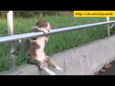 Серьезные мысли о жизни Kisa Smile Прикольные фото и видео с кошками