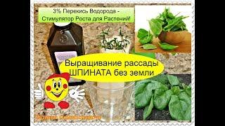 Перекись водорода для рассады помидор отзывы 54