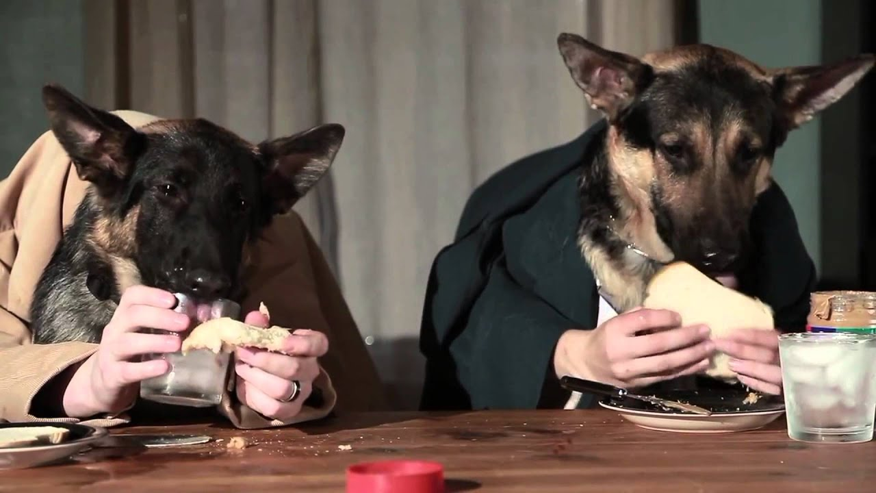 Video divertenti cani che mangiano a tavola colazione da cani youtube - Cane che mangia a tavola ...