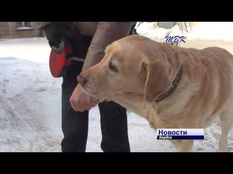 В Бердске сорвался с цепи и напал на хозяйских собак разъяренный пес породы алабай