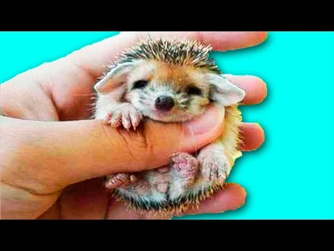 10 МИЛЕЙШИХ ДЕТЕЙ ЖИВОТНЫХ / 10 beautiful baby animals