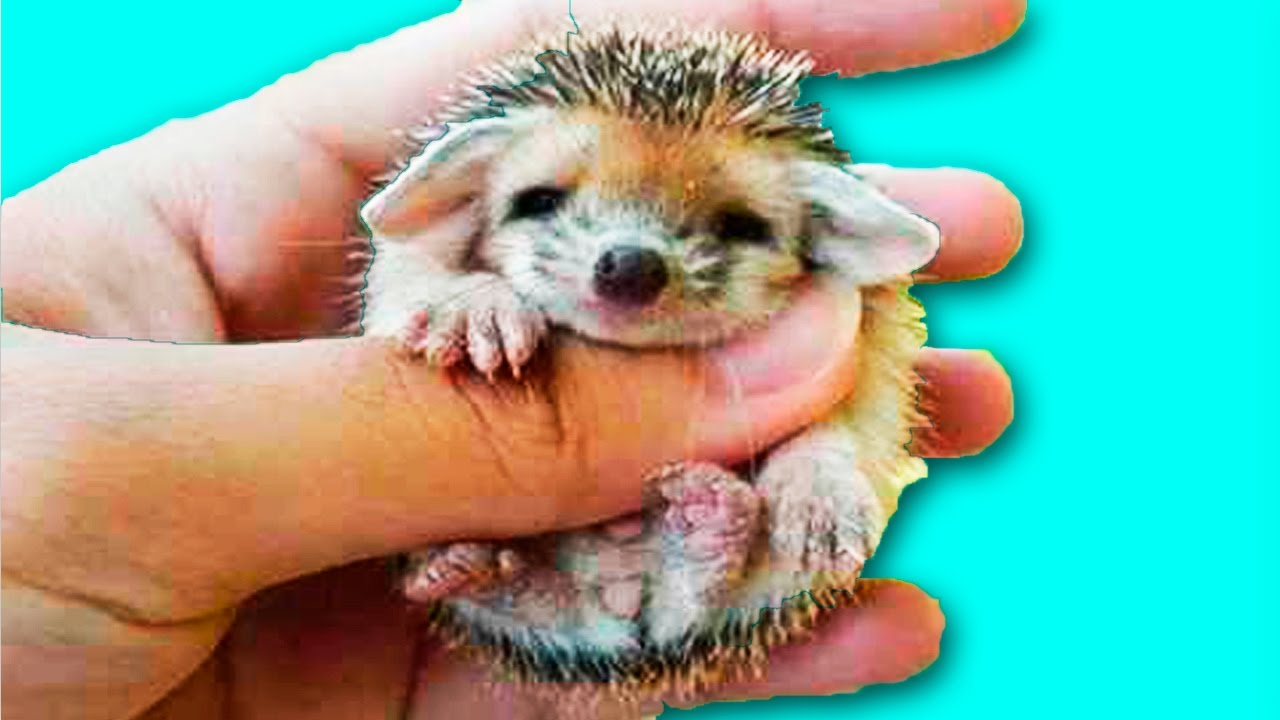 The most cutest animals in the world