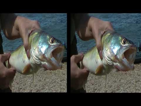 VR 3D фильмы - Рыбалка на Оке в 3D - Документальное кино в 3D