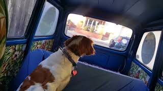 I drive my dog to work... in a Subaru 360 Van