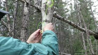 Tapping Birch without a Tap! Episode 19