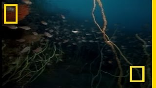 Strange Japanese Sea Creatures | National Geographic