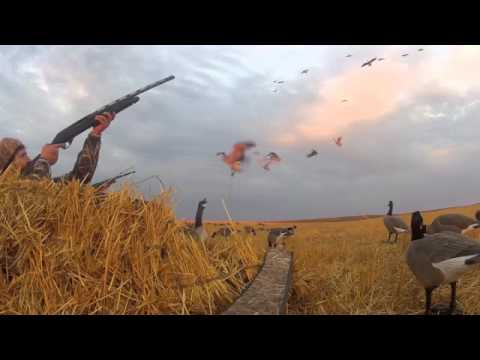 North Dakota goose hunting with hang loose outdoors