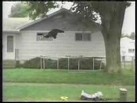 Bear Trampoline Music Videos