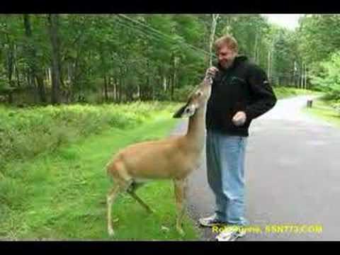 Dog Deer