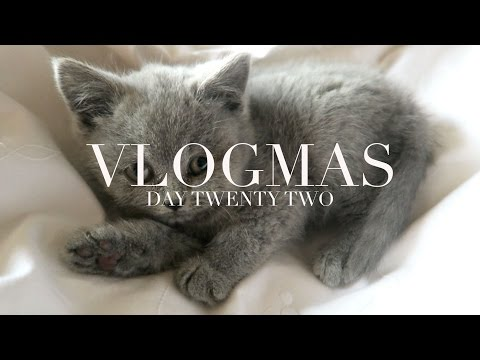 Vlogmas Day 22 | Mince Pie Fail (and more kitten)