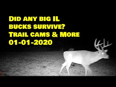 Did ANY Big Illinois bucks survive? Trail cams, New road update, property tour & more