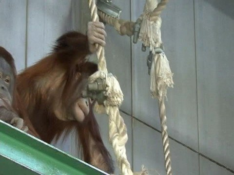 旭山動物園(旭川)001-AsahiyamaZoo#001inAsahikawa-