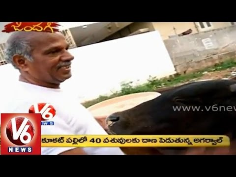 V6 Zindagi - Meghavat Agarwal feeding roadside cattle since 20 years
