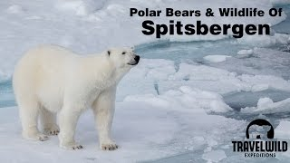 Polar Bears and Wildlife of Spitsbergen Svalbard