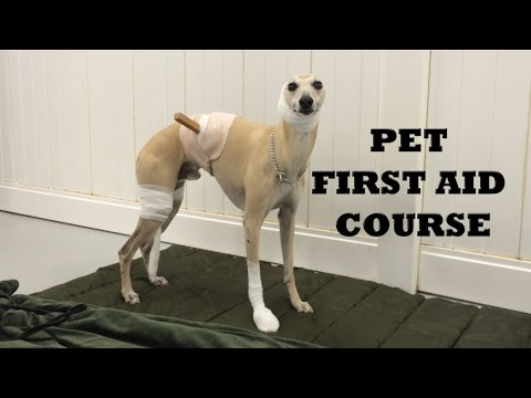 Dog Travel - Pet first aid course