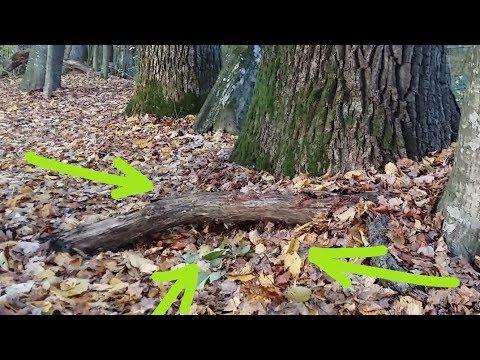 Необычные НАХОДКИ у корня 200-летнего ДЕРЕВА!!!Удача или чудеса леса! В Поисках Клада и Сокровищ