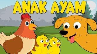 Anak ayam | Tek kotek kotek | Lagu Anak-Anak Indonesia Terpopuler | Kumpulan | Lagu Anak TV