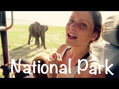 Elefantenherde geht baden! | Nationalpark Udawalawe | Sri Lanka #VLOG57
