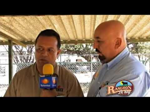178 Especial Rancho A.J. Borregos