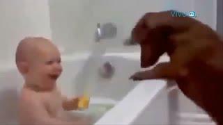 Những chú chó thích đùa nhất thế giới =)) Cực đáng yêu