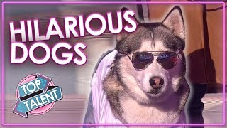 FUNNIEST DOG AUDITIONS & MOMENTS EVER on Britain's Got Talent   Top Talent