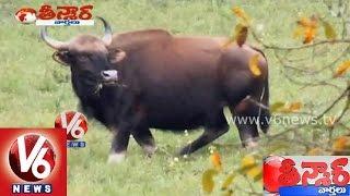 Telangana government to declare state symbols - Teenmaar News