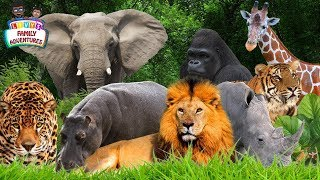 Learning Jungle Animals - Jungle Animals Names and Sounds