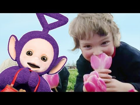 Teletubbies: Flowers Pack - Full Episode Compilation video