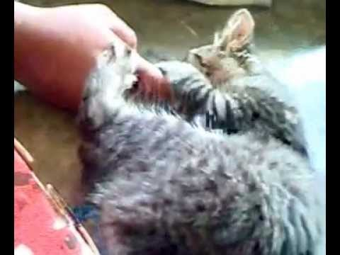 Funny Pussy Cat Is Tom.mp4 video