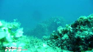 20 Avventure Pesca in Apnea 2010 ( video HD )