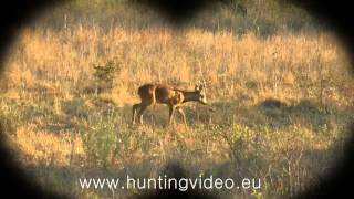 Roe Buck Hunting In Hungary Nagykanizsa (HD)