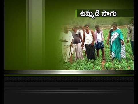 Anantapur District Farmers Conducting Agriculture With Mutual Understanding; ETV Special Report