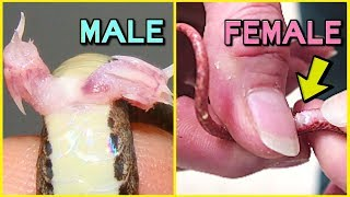 5 WAYS TO TELL IF YOUR SNAKE IS A BOY OR GIRL! | BRIAN BARCZYK
