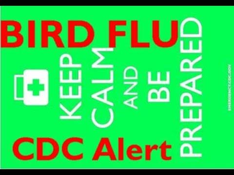 ALERT!  CDC Warns on Human Bird Flu in USA