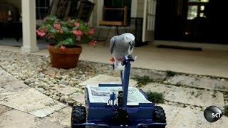 Pepper the Parrot Drives His Own Vehicle | Outrageous Acts of Science