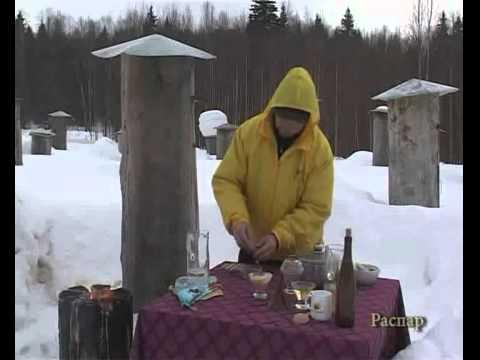 Как приготовить пчелиный подмор? Отвар, распар, крем, настой из пчелиного подмора