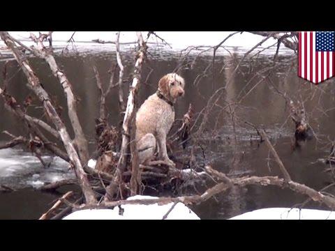 Perro atrapado en rio congelado es rescatado por bomberos de Boston