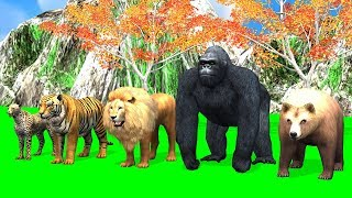 Wild animals finger family song for kids learn | Gorilla,lion,tiger,3d rhymes,Arcus N Media kidz