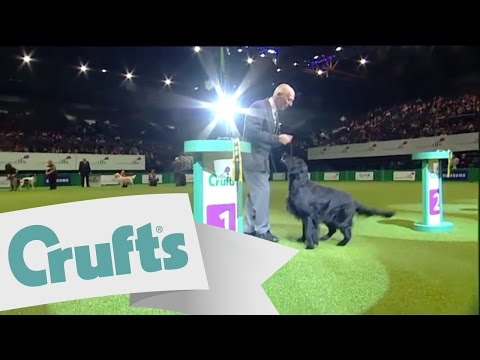 dfs Crufts 2011 - Gundog Best in Group