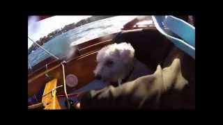 Mirror Dinghy Cruise with Wolfie